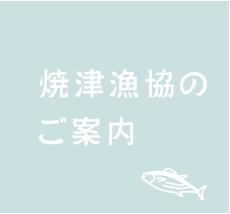 焼津漁協のご案内