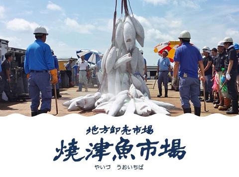 地方卸売市場 焼津魚市場(やいづ うおいちば)