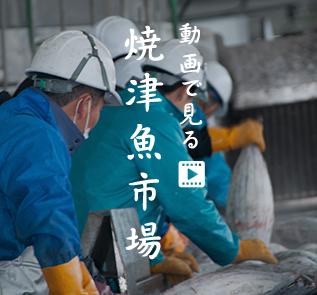動画で見る 焼津魚市場